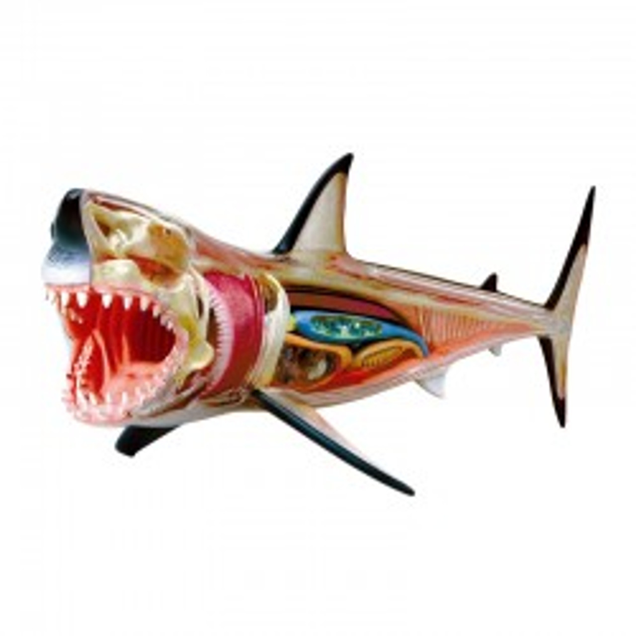 4 D Great White Shark Model