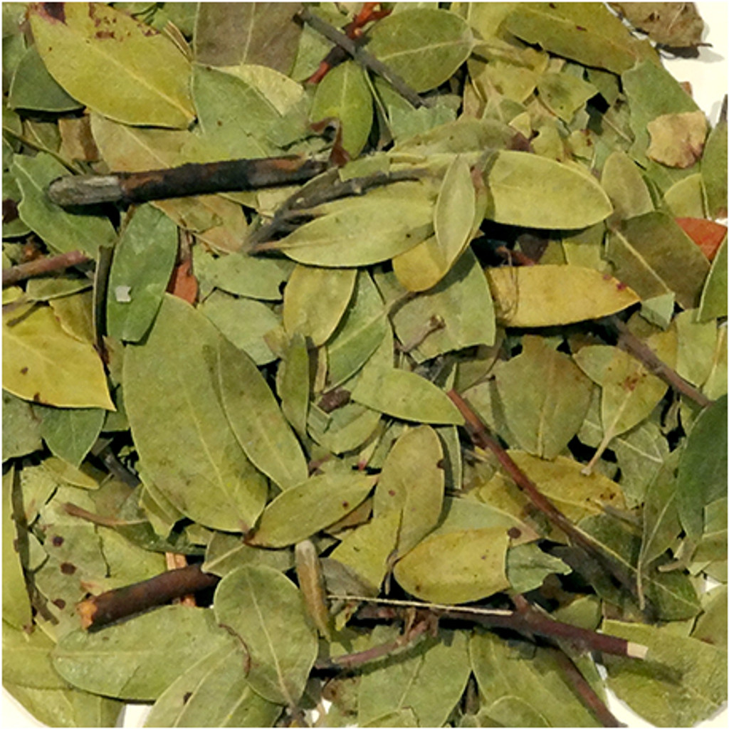 Bearberry Leaf