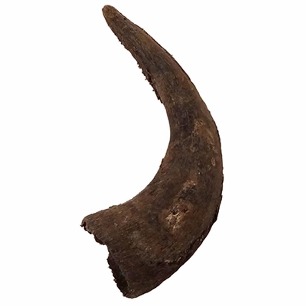 Buffalo Horn Caps