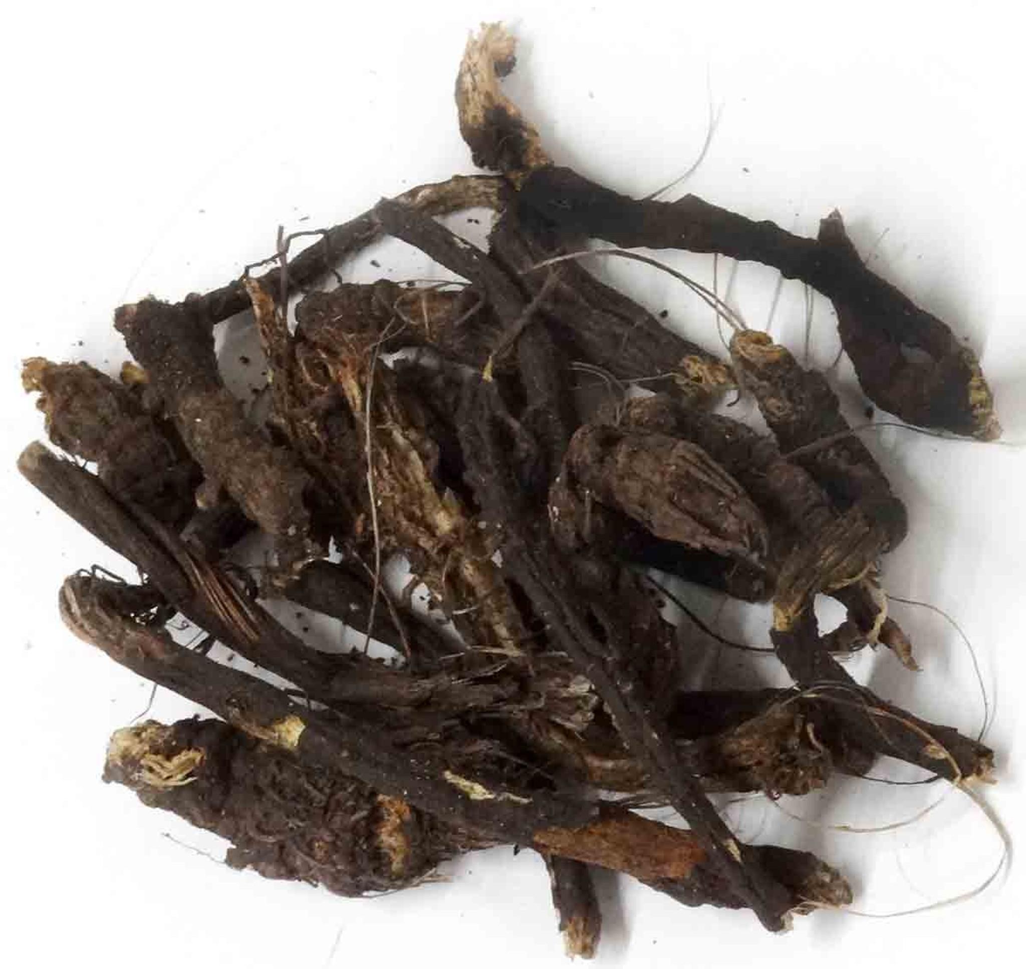 Osha Roots | Native American Herb | Prairie Edge