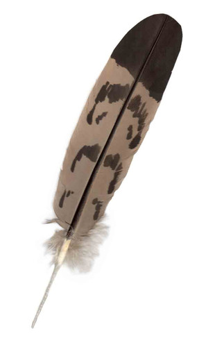 Imitation: Mature Golden Eagle Feather