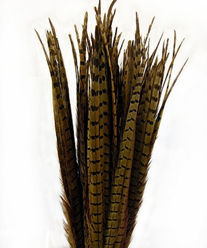 Chinese Ringneck Pheasant Feathers