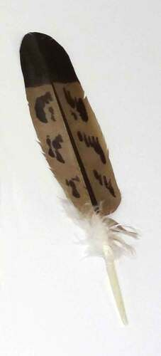 Imitation Mature Golden Eagle Feather