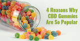 4 Reasons Why CBD Gummies Are So Popular