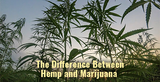 The Difference Between Hemp and Marijuana