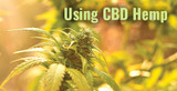 Using CBD Hemp