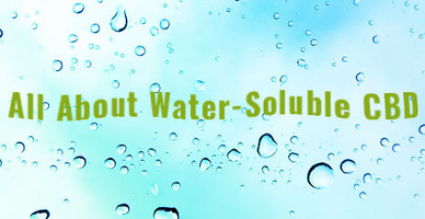 All About Water-Soluble CBD