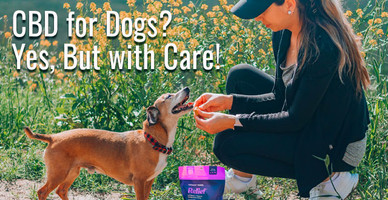 CBD for Dogs? Yes, But with Care!