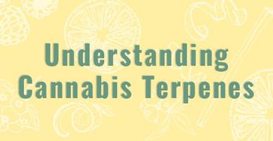 Understanding Cannabis Terpenes