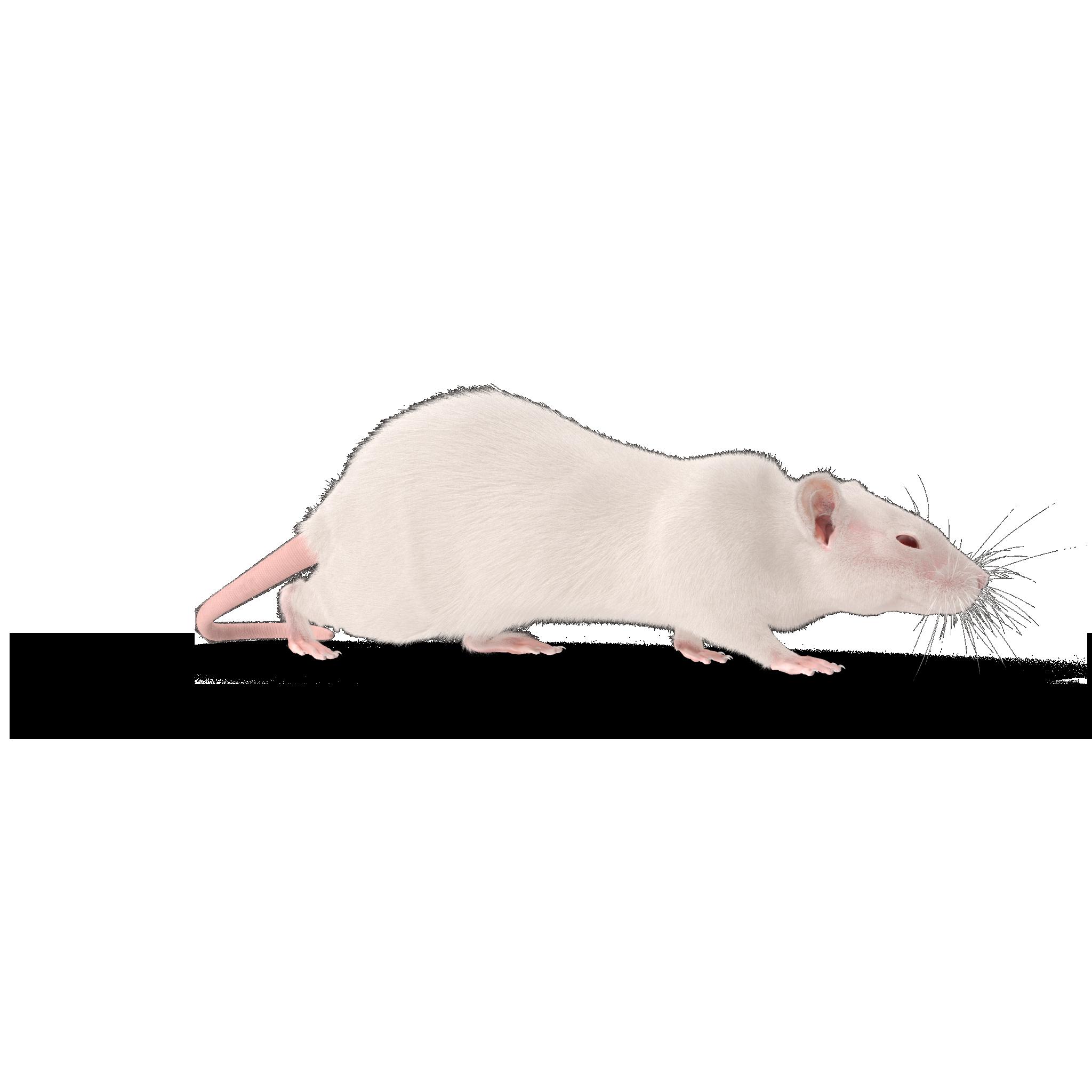 rat.i14.2k.png