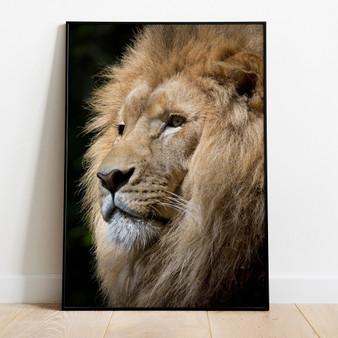 Lion (v. 60d28e7d)