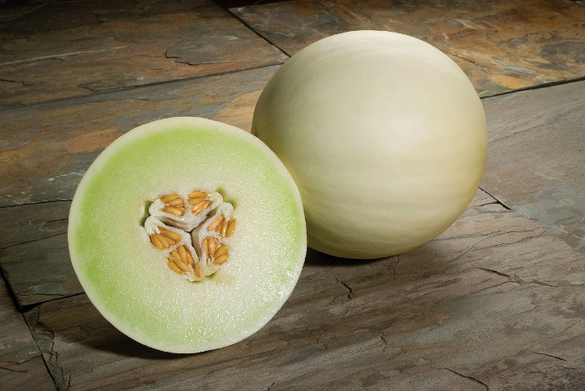 Melon - 'Snow Mass F1' Honeydew
