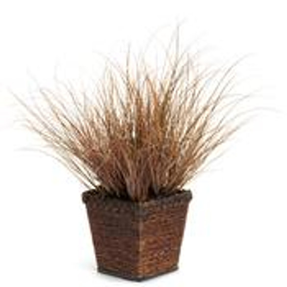 Carex flagellifera Grassful Grasses® 'Toffee Twist' plant