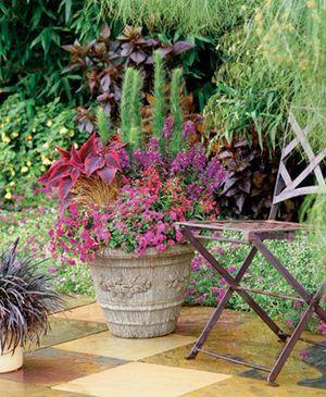 Eupatorium Capillifolium Elegant Feather Romence Gardens Greenhouses