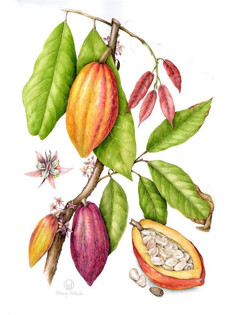 charleys-our-story-theobroma-cacoa.jpg