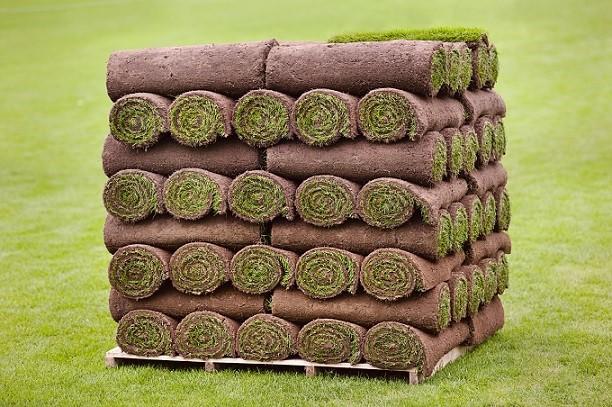 Classic Lawn Turf