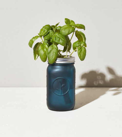 Modern Sprout Garden Jar