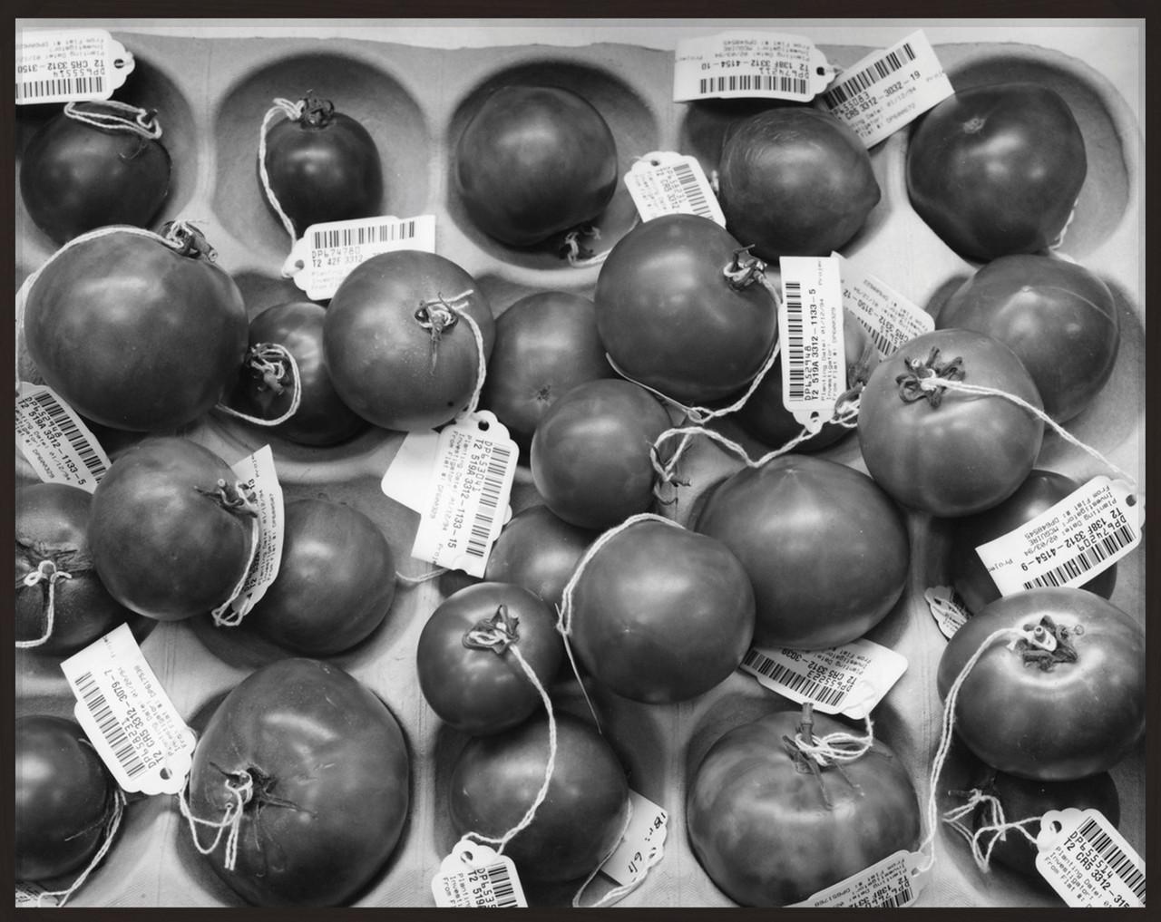 catherine wagner genetically engineered tomatoes