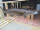 """Cobia 56"""" - 3D Fish Mount Replica - Suspension Mount"""