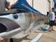 """153"""" Blue Marlin Full Mount"""