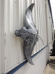"""54"""" Spotted Eagle Ray Mount"""
