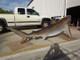 "138"" Bull Shark 3D Suspension Mount"
