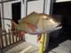 "30"" Mutton Snapper 3D Fish Mount Replica - Suspension Mount"