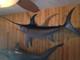 "106"" Broadbill Swordfish Full Mount"