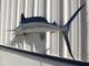 """75"""" White Marlin Half Mount Fish Replica"""