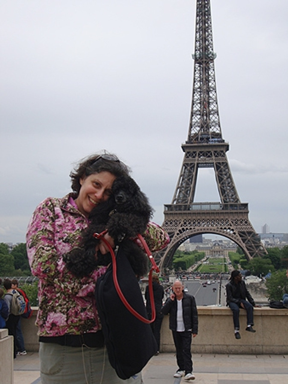 Poochie, a terrific poodle and the best traveling