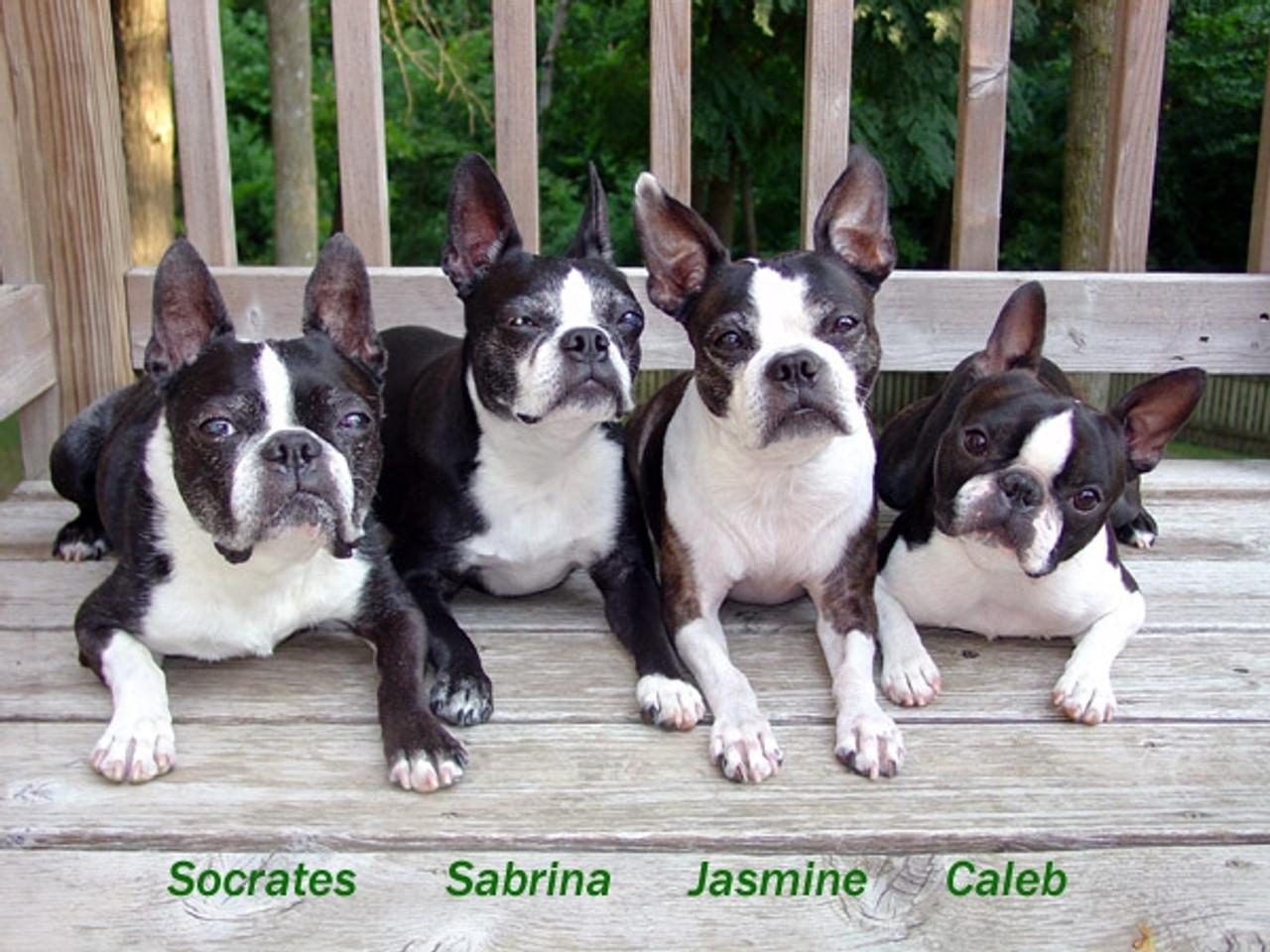 Socrates, Sabrina, Jasmine & Caleb (2008 Winner)