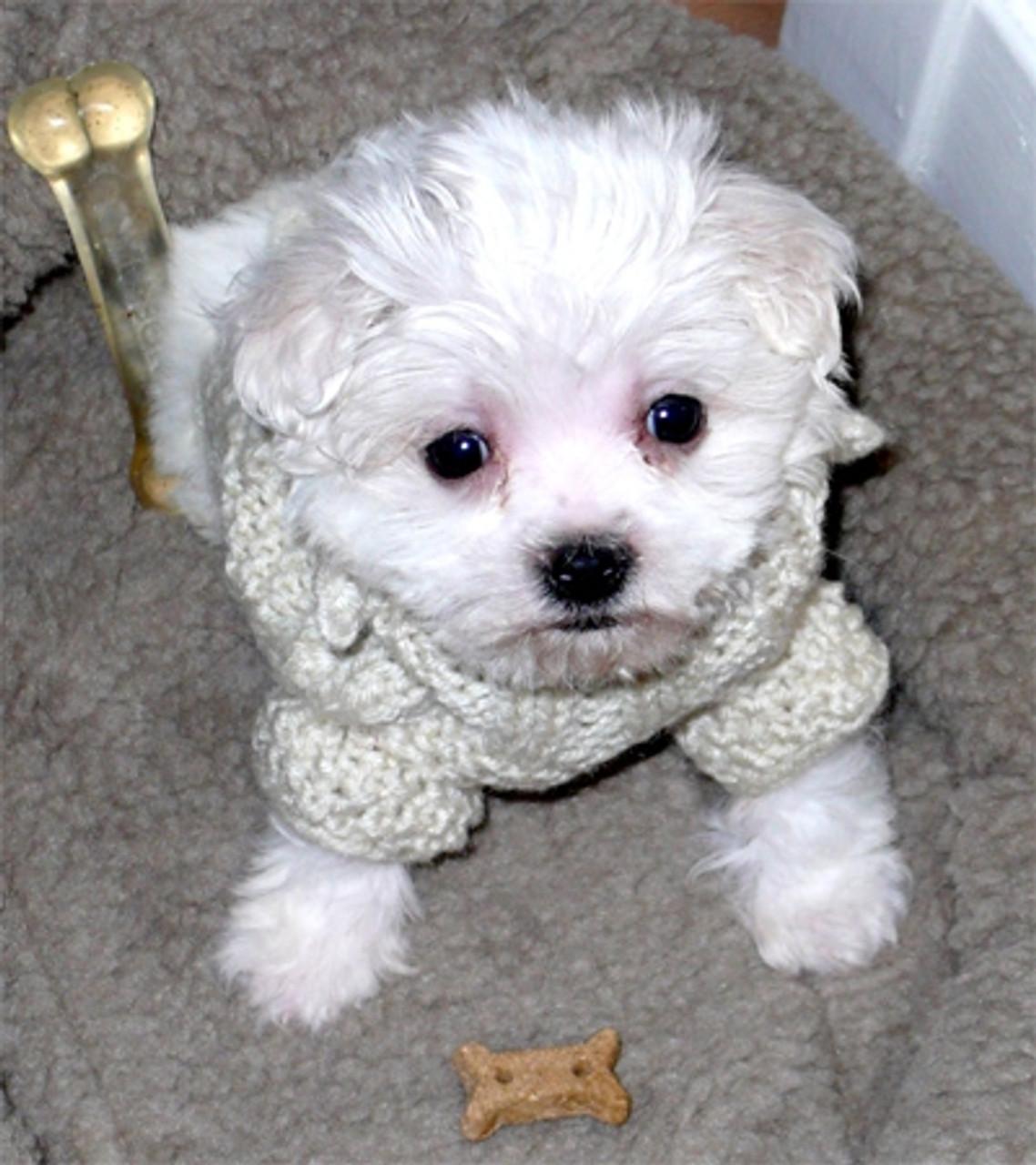 Jaclyn's Puppy