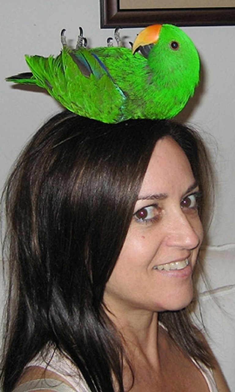 "Romeo makes a great Hat (""Me and My Bird"" Winner)"