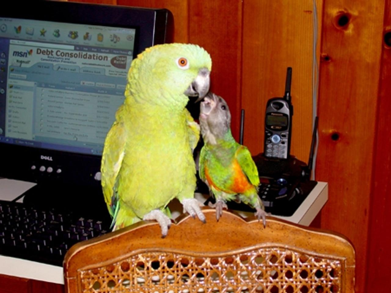Christina's Kiwi and Gizmo