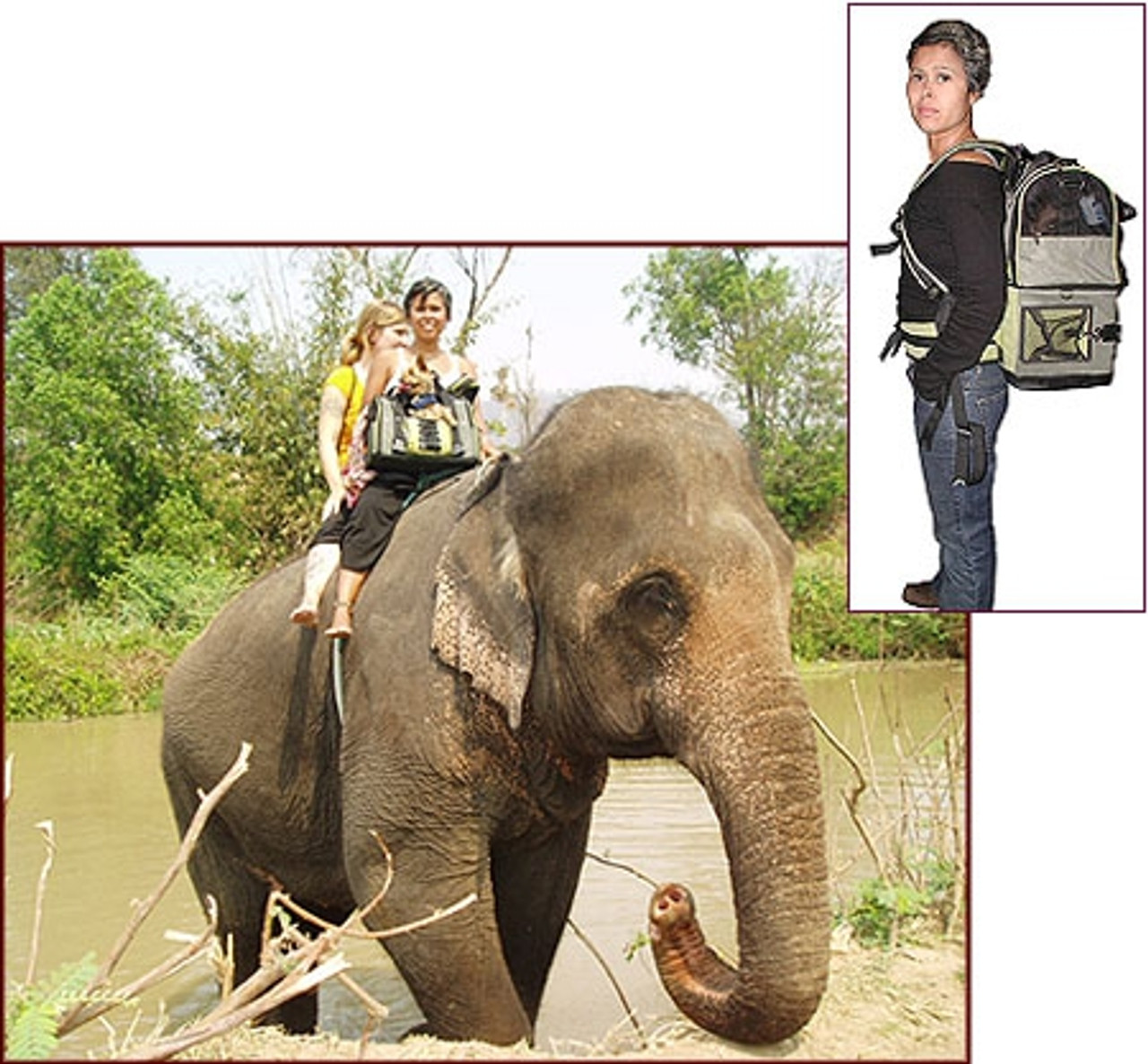 Elephant ride with my dog (2006 Winner)