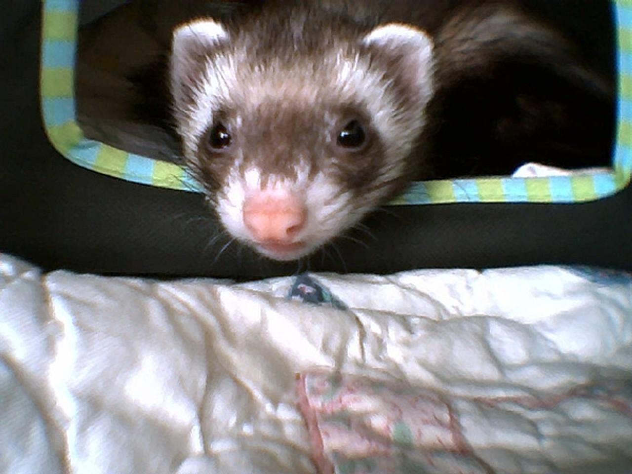 Dawn Jones' Littlebit (2008 Winner)