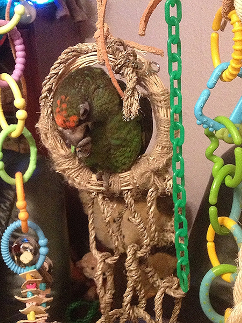 Lacey, a busy Jardine parrot, in her favourite toy