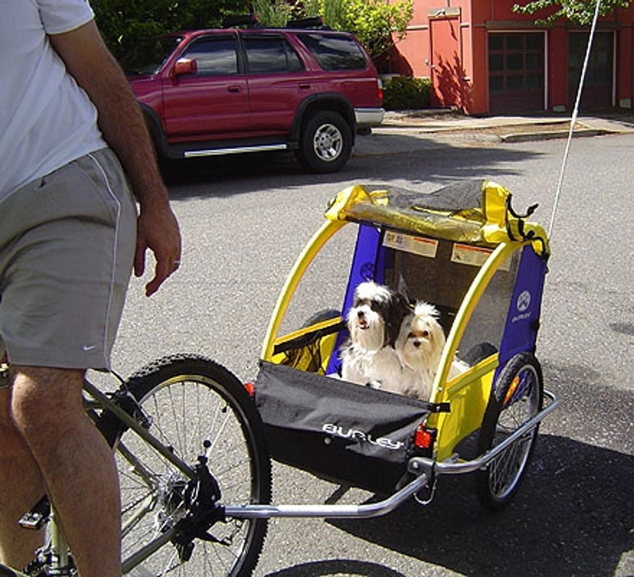 Kristin's Scooter and Lulu Bella