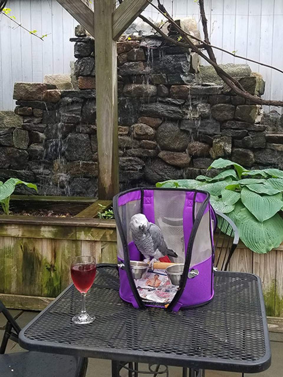 Wine Tasting with a Grey Parrot