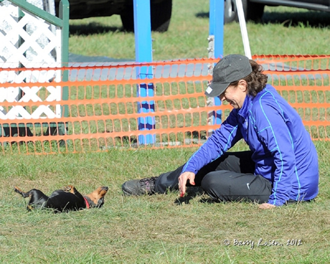 Doing agility and bonding with Roxie, the little d