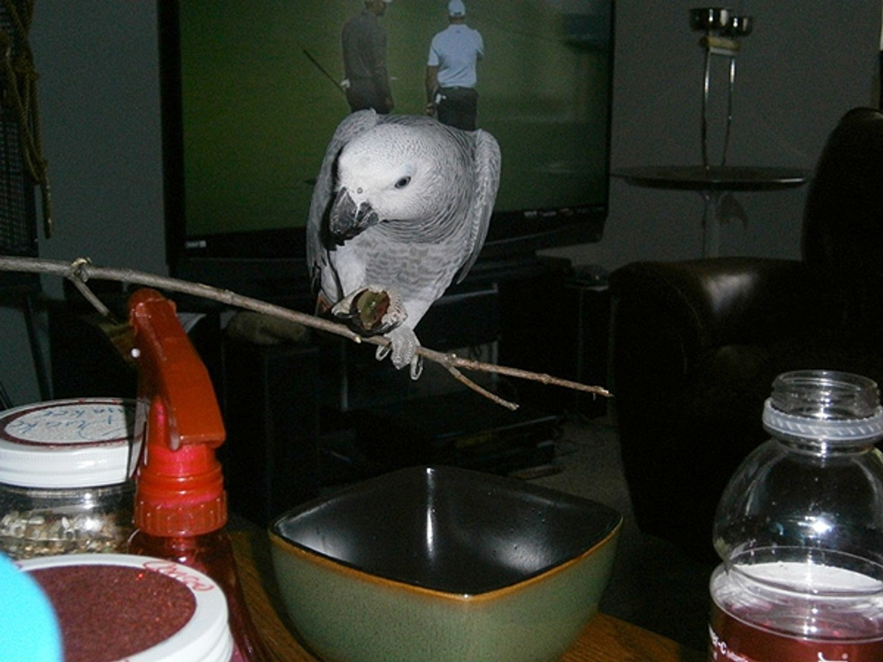 One more seat please - the bird that like to eat