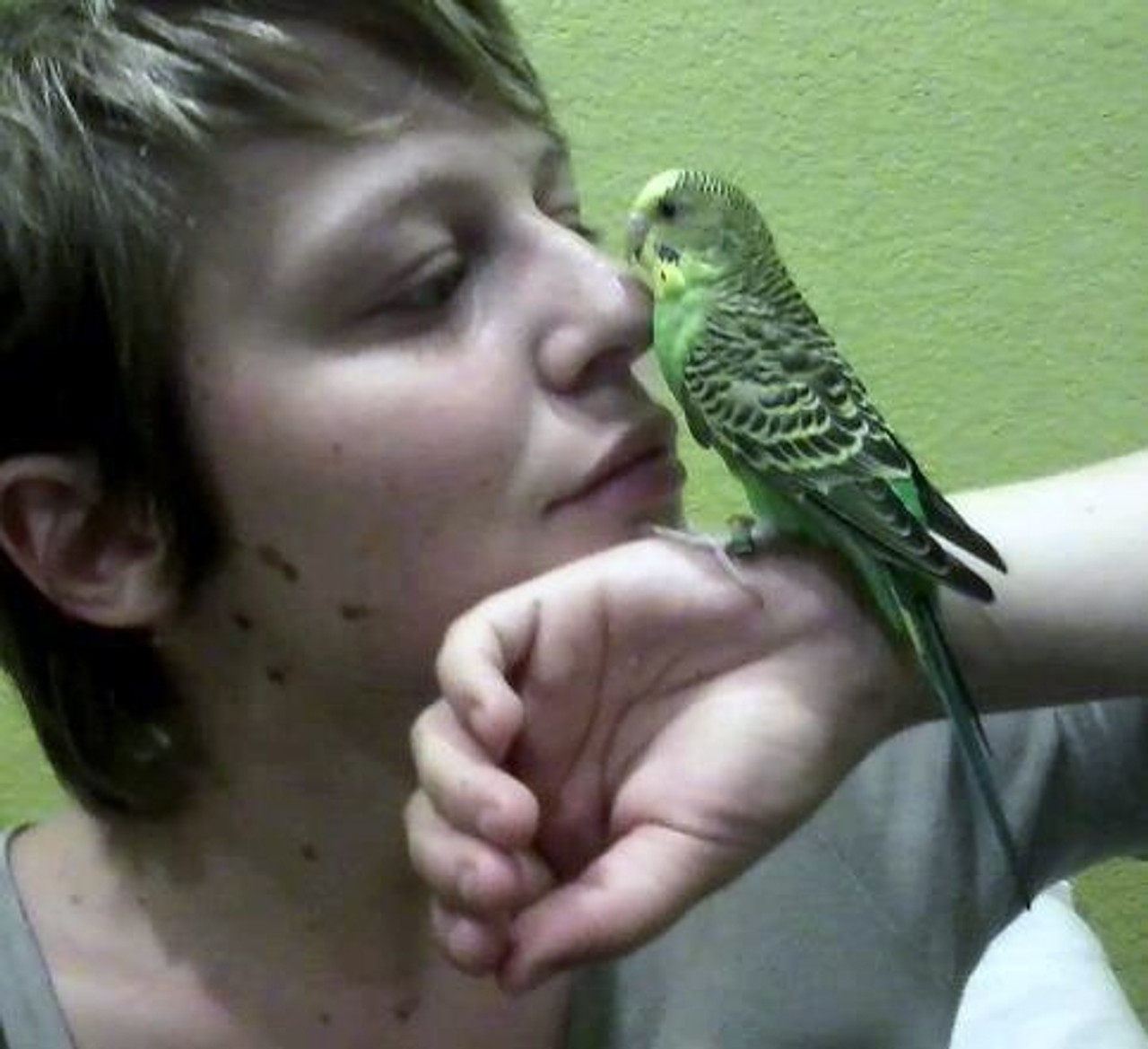 "Amanda's Cadie, a parakeet, ""It's was meant to be."