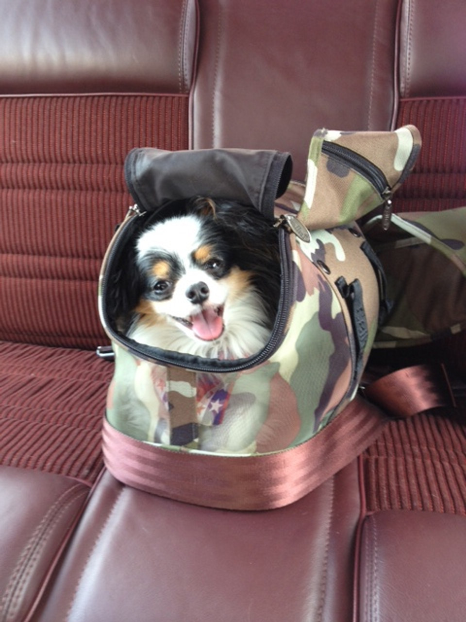 The Happiest Papillon in town named Cowboy