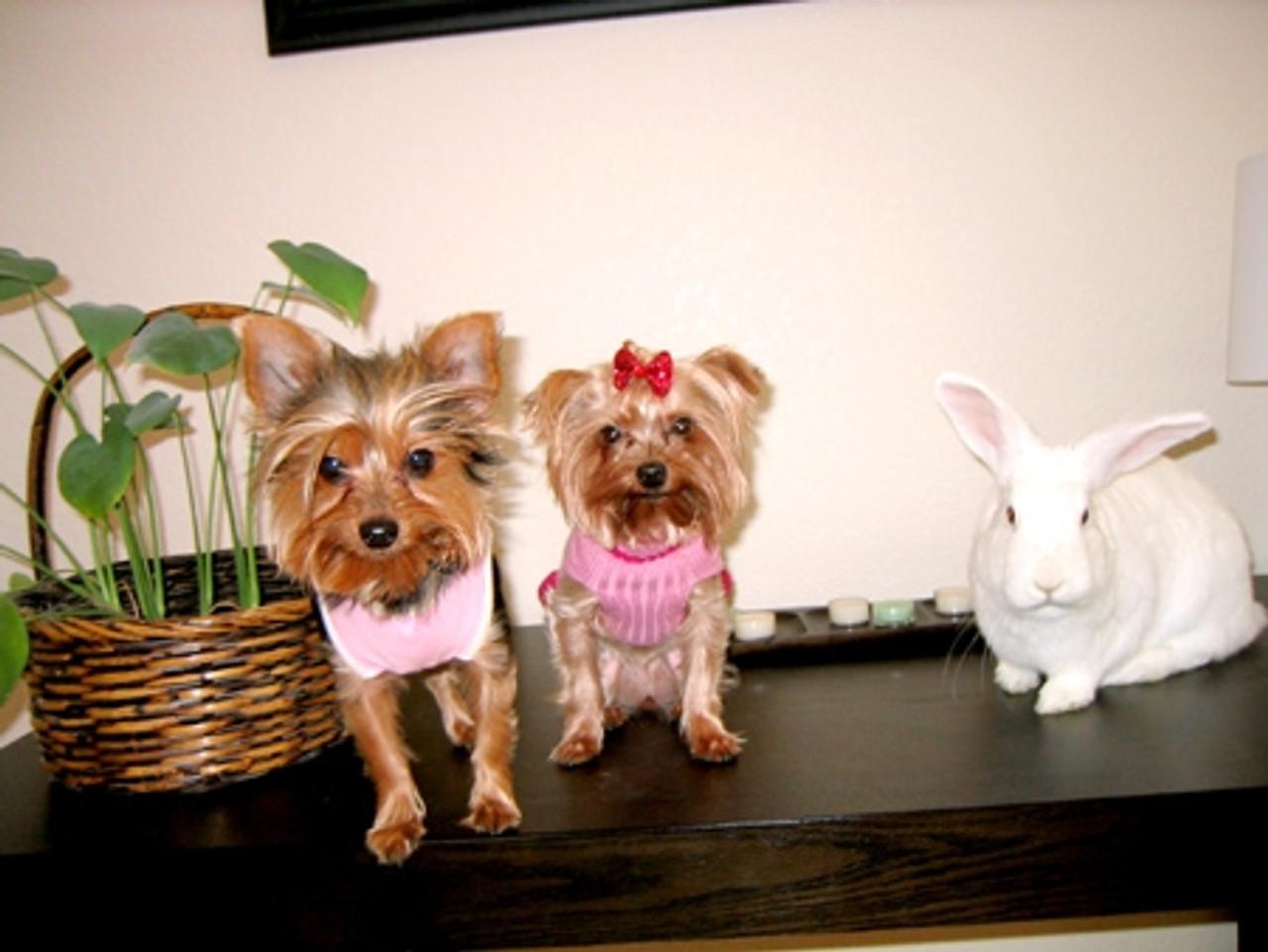 Romuel's Penny, Jordan & Harley (2008 Winner)