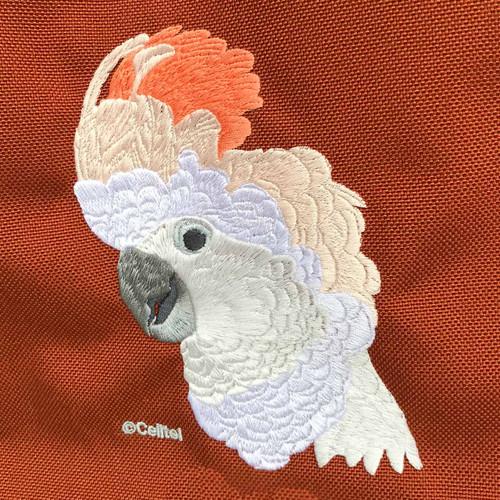 BIRDS & PARROTS - BIRDS by Species - Cockatoos - Moluccan