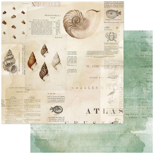 49 and Market Vintage Artistry 12x12 Paper: Shore | Triton's Shell