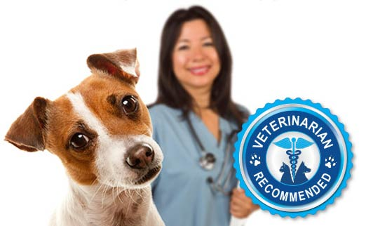 Veterinarian recommended NuVet Plus