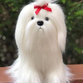 Salli the Maltese Puppy©