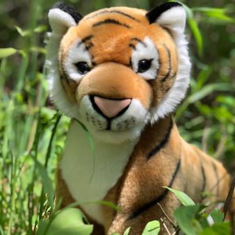 Kingdom Kuddles  African Tiger Kenya