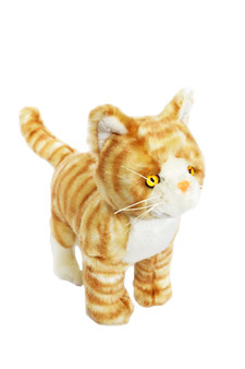 Oscar Orange Tabby Kitten